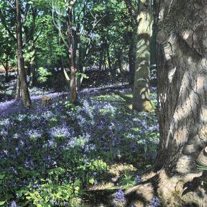 Bluebell Wood by Jo Thacker