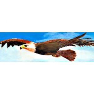 Eagle King of the Skies by Derek O'Halloran